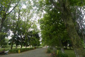 Parcul Gării, Constanța