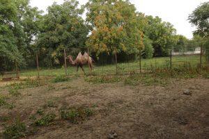 Grădina Zoologică din Călăraşi, Călăraşi