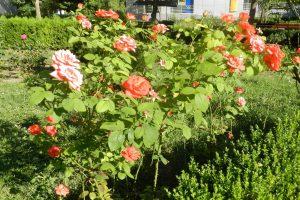 Parcul Florilor, Călărași