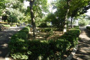 Общински Парк, Кълъраш