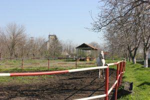 The Stud Farm Dor Mărunt, Dor Mărunt