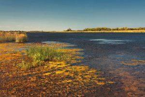 Lacul Shabla, Shabla