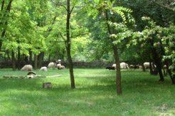 Parcul Zoologic, Dobrich