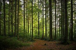 """Natural Park """"Oaks"""", Dobrich"""