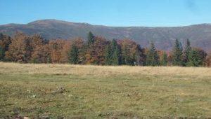 Gorna Koriya Reserve, Berkovitsa