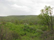 Parcul Pădurea Belenă, Byala