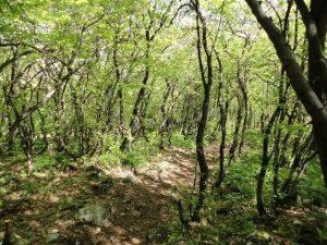 Piatra Eco, Gorna Oryahovitsa